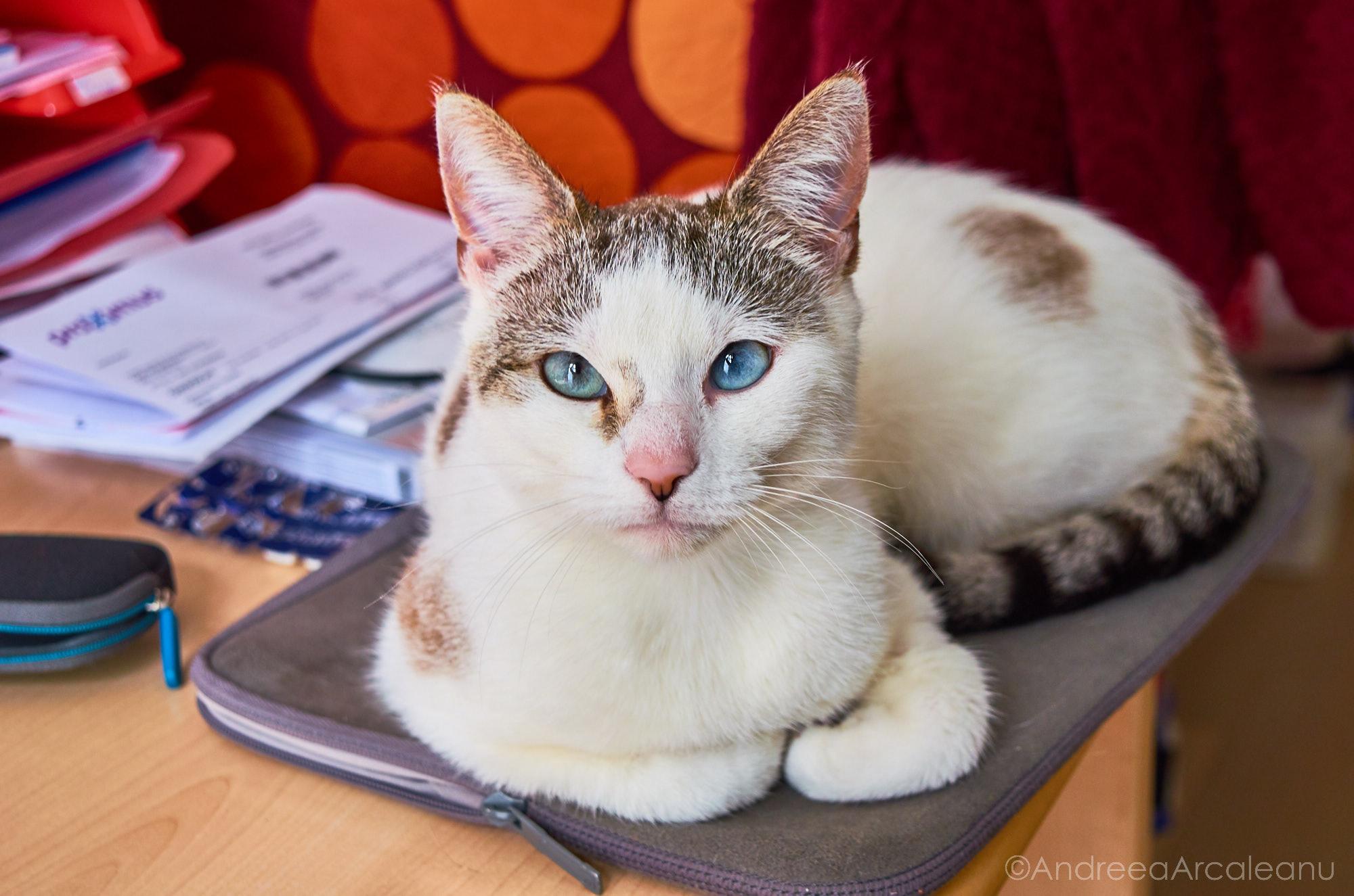 2016-our-cats-dsc_6253