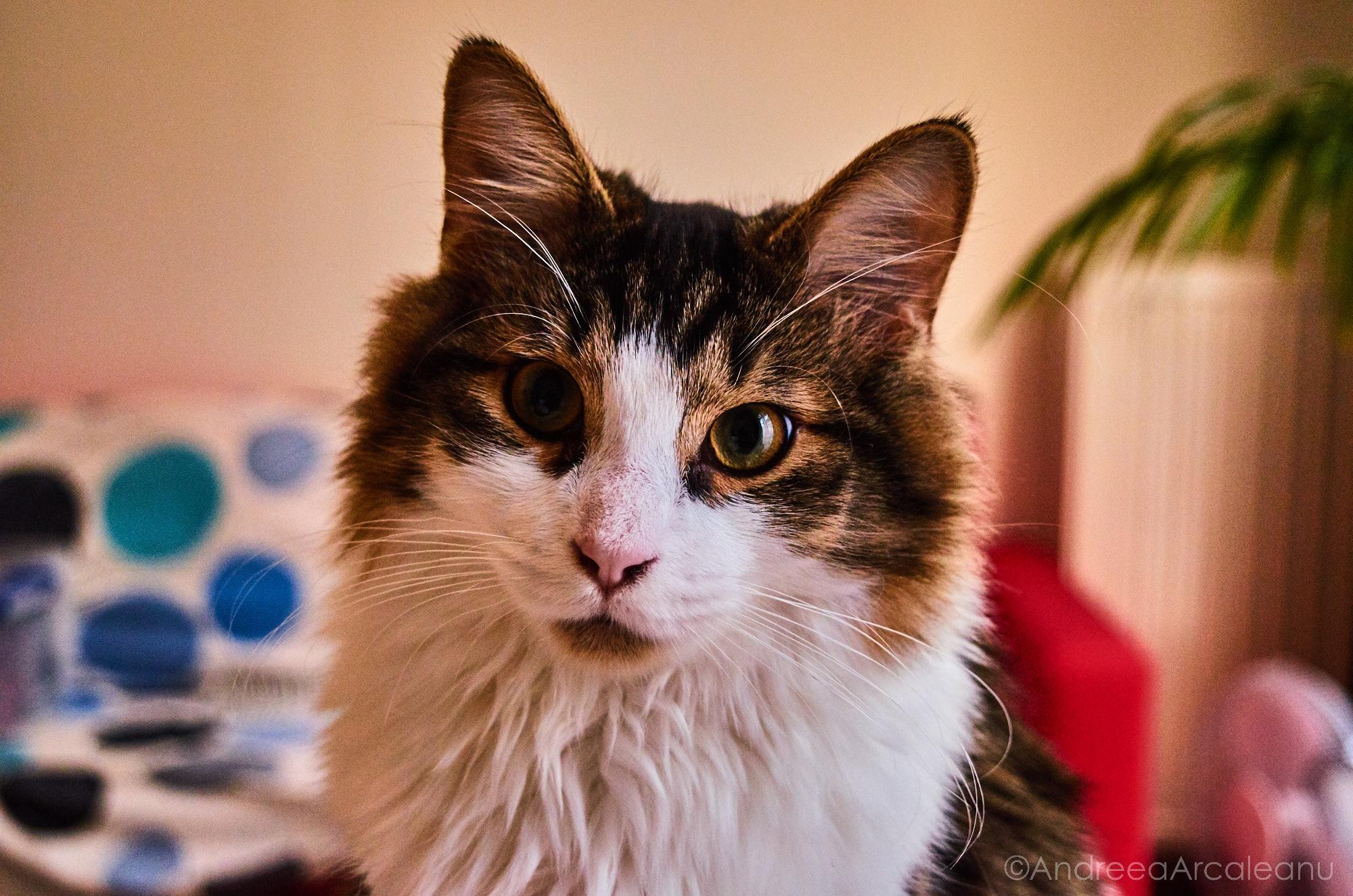 2016-our-cats-dsc_7829