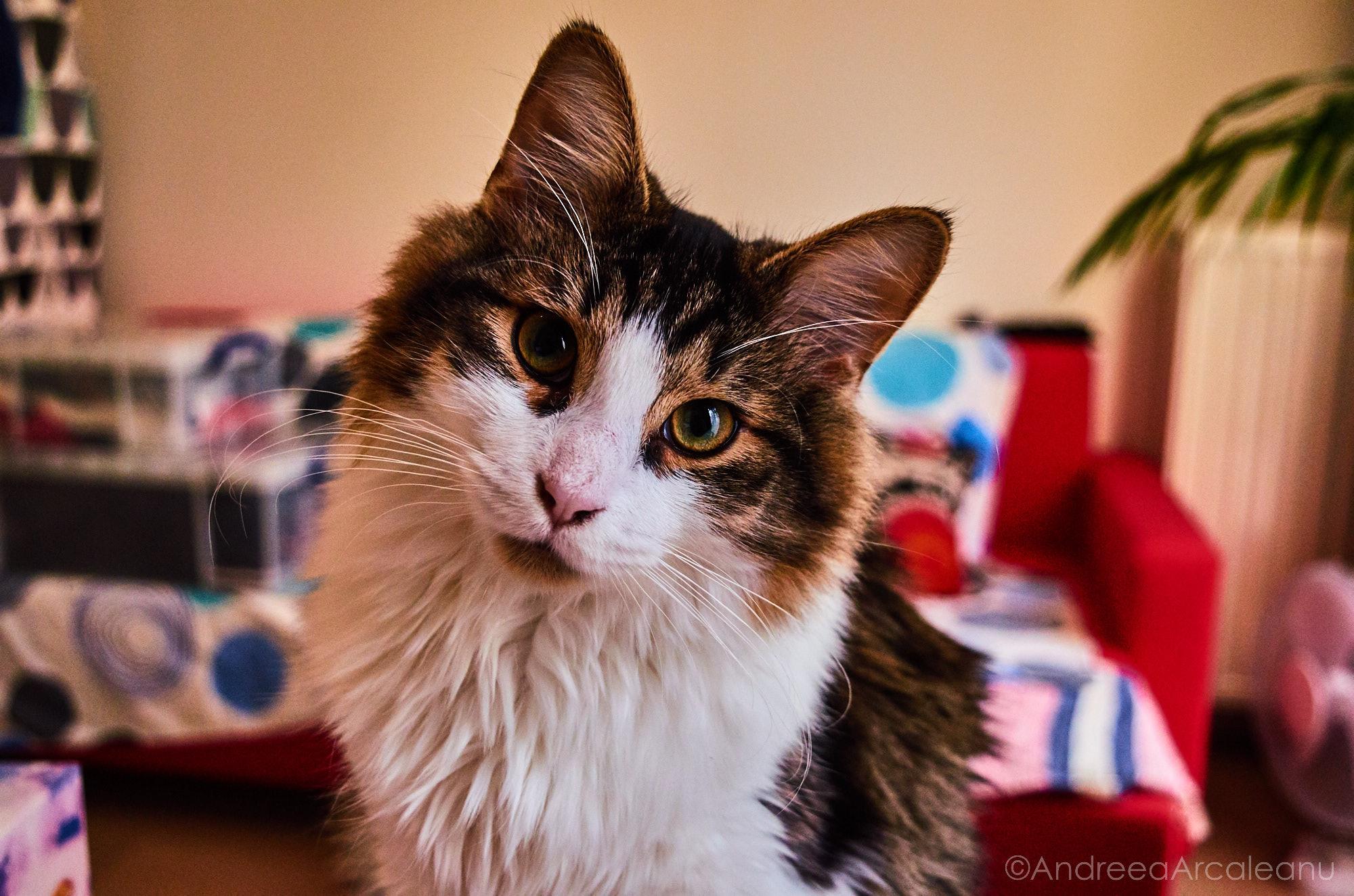2016-our-cats-dsc_7834