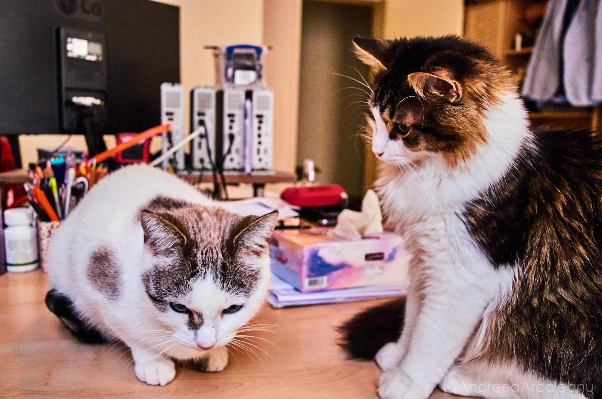 2016-our-cats-dsc_7835