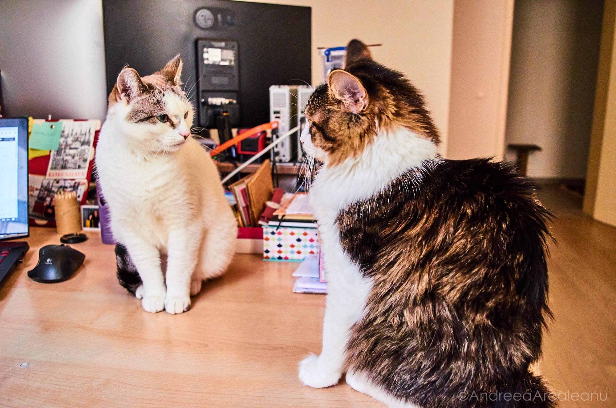 2016-our-cats-dsc_7839