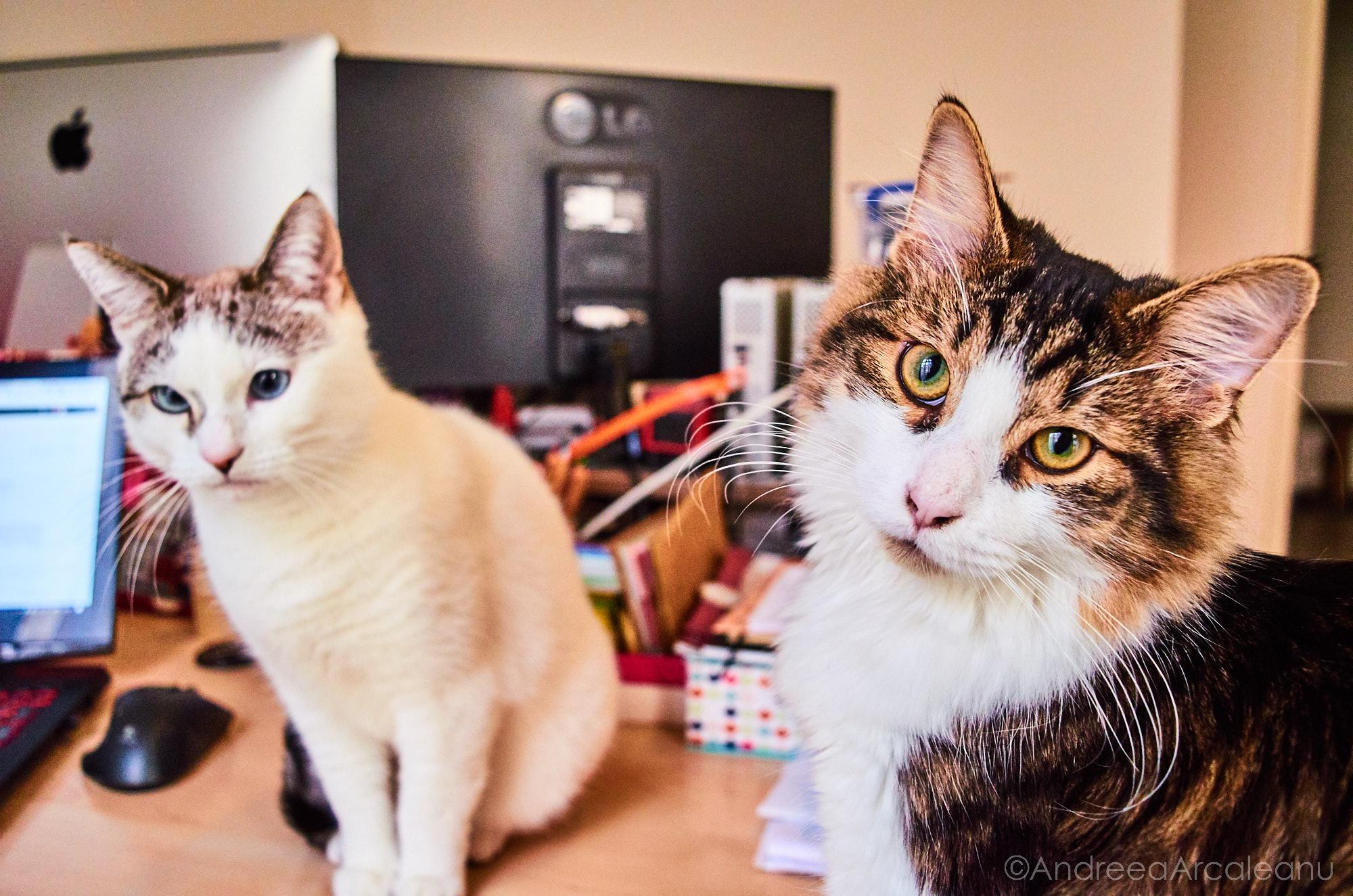 2016-our-cats-dsc_7840
