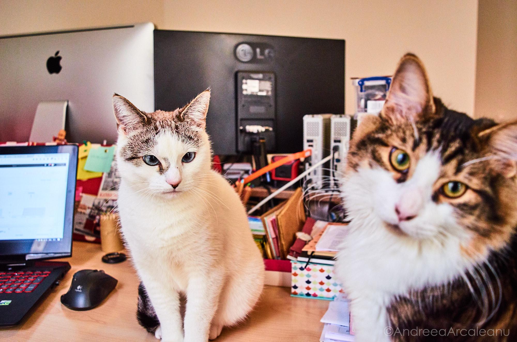 2016-our-cats-dsc_7841