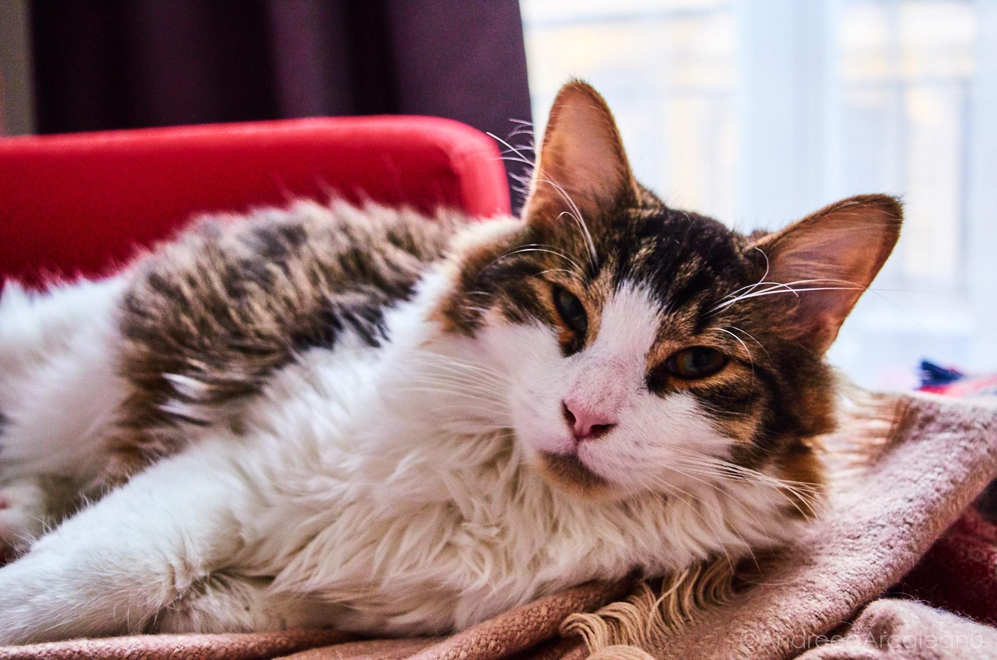 2016-our-cats-dsc_7849