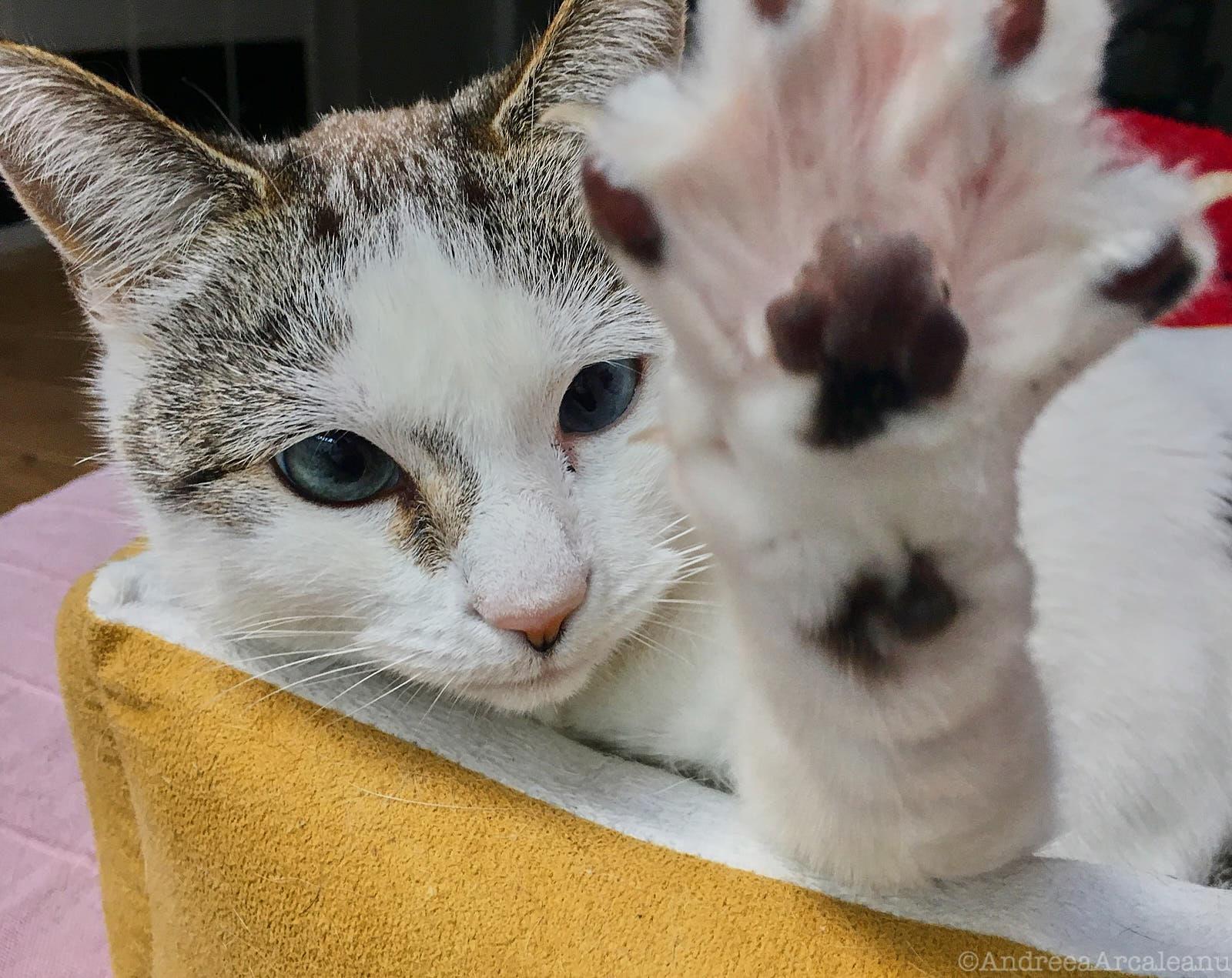 CatsExperiment 4