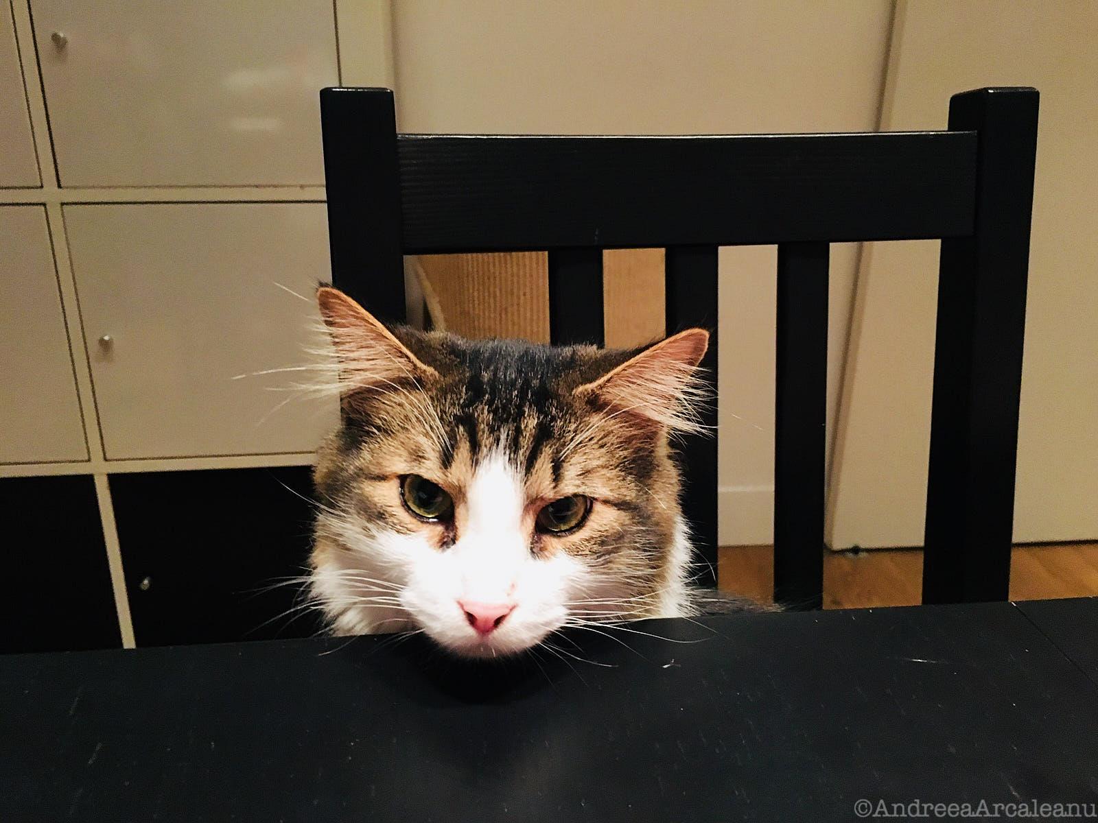 CatsExperiment 8