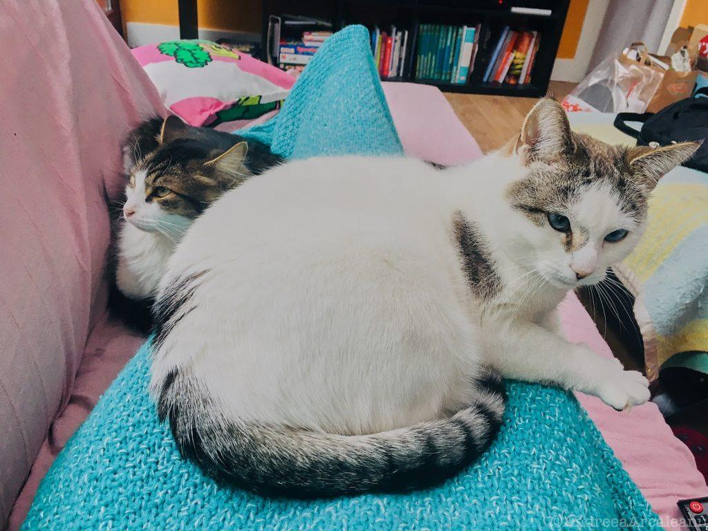 CatsExperiment 9